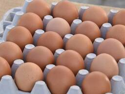 Brown Tables eggs