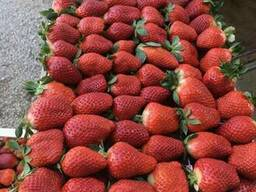 Fresh strawberries - photo 2