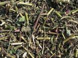 Medicinal herbs - фото 4