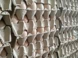 Εκκόλαψη Αυγό αυξανόμενης κρεατοπαραγωγής R308 - photo 3
