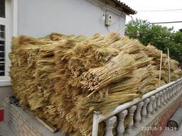 Sorghum for producing eco brooms
