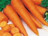 Сушеные овощи и зелень от производителя ! - photo 6