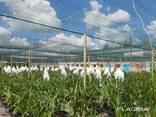 Теневая сетка - защита от непогоды для агроплощадок - фото 2