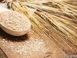 Wheat bran - photo 1